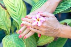 Λουλούδι frangipani Plumeria στο χέρι γυναικών σε ένα όμορφο υπόβαθρο φύσης Στοκ φωτογραφία με δικαίωμα ελεύθερης χρήσης