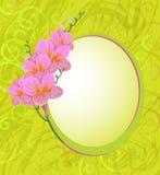 Λουλούδι Freesia απεικόνιση αποθεμάτων