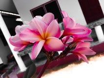 Λουλούδι Frungipani για το επιχειρησιακό λογότυπο SPA Στοκ εικόνα με δικαίωμα ελεύθερης χρήσης