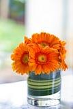 Λουλούδι Gerbera Στοκ Φωτογραφίες