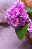 Λουλούδι-Hydrangea Στοκ εικόνα με δικαίωμα ελεύθερης χρήσης
