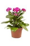 Λουλούδι Kalanchoe στοκ φωτογραφία με δικαίωμα ελεύθερης χρήσης