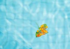 Λουλούδι Lantana Στοκ Εικόνα