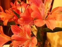 Λουλούδι Lilium στον πίνακα Στοκ Φωτογραφία