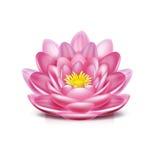 Λουλούδι Lotus που απομονώνεται στο λευκό Στοκ Εικόνες