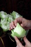 Πτυχές Lotus με το χέρι Στοκ Εικόνα