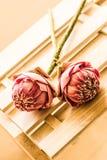 Λουλούδι Lotus δύο στοκ εικόνα