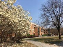 Λουλούδι Magnolia την άνοιξη Στοκ εικόνες με δικαίωμα ελεύθερης χρήσης