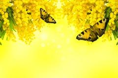 Λουλούδι Mimosa με την πεταλούδα στο κίτρινο υπόβαθρο Στοκ φωτογραφίες με δικαίωμα ελεύθερης χρήσης