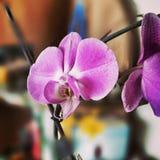 Λουλούδι Orchidaceae Καλλιτεχνικός κοιτάξτε στα εκλεκτής ποιότητας ζωηρά χρώματα Στοκ φωτογραφίες με δικαίωμα ελεύθερης χρήσης