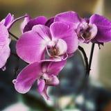 Λουλούδι Orchidaceae Καλλιτεχνικός κοιτάξτε στα εκλεκτής ποιότητας ζωηρά χρώματα Στοκ εικόνα με δικαίωμα ελεύθερης χρήσης
