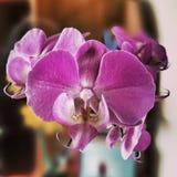Λουλούδι Orchidaceae Καλλιτεχνικός κοιτάξτε στα εκλεκτής ποιότητας ζωηρά χρώματα Στοκ εικόνες με δικαίωμα ελεύθερης χρήσης