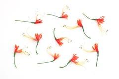 Λουλούδι Ornage Στοκ εικόνα με δικαίωμα ελεύθερης χρήσης