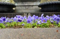 Λουλούδι Pansy διακοσμητικό Στοκ φωτογραφία με δικαίωμα ελεύθερης χρήσης
