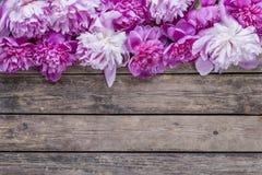 Λουλούδι Peonies Στοκ εικόνες με δικαίωμα ελεύθερης χρήσης
