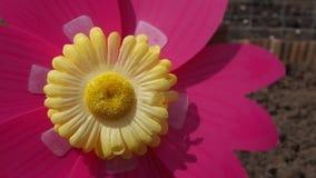 Λουλούδι Pinwheel που γυρίζει γρήγορα απόθεμα βίντεο