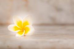 Λουλούδι Plumaria Στοκ Φωτογραφίες
