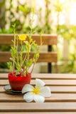 Λουλούδι Plumeria και oleracea Portulaca που τίθεται στον ξύλινο πίνακα Στοκ εικόνα με δικαίωμα ελεύθερης χρήσης