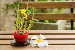 Λουλούδι Plumeria και oleracea Portulaca που τίθεται στον ξύλινο πίνακα Στοκ φωτογραφία με δικαίωμα ελεύθερης χρήσης