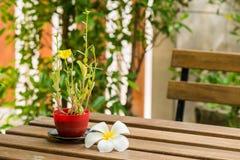 Λουλούδι Plumeria και oleracea Portulaca που τίθεται στον ξύλινο πίνακα Στοκ Φωτογραφίες