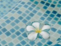 Λουλούδι Plumeria που επιπλέει στην πισίνα Στοκ εικόνα με δικαίωμα ελεύθερης χρήσης