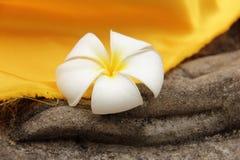 Λουλούδι Plumeria που στηρίζεται σε ετοιμότητα ενός του Βούδα αγάλματος Στοκ εικόνες με δικαίωμα ελεύθερης χρήσης