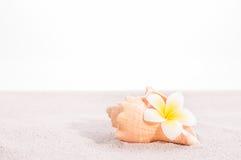 Λουλούδι Plumeria σε ένα κοχύλι conch στην άμμο Στοκ Εικόνα