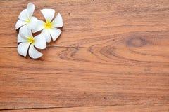 Λουλούδι Plumeria σε ξύλινο Στοκ Εικόνα