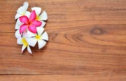 Λουλούδι Plumeria σε ξύλινο Στοκ Εικόνες