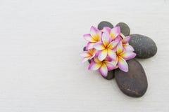 Λουλούδι Plumeria στην καφετιά πέτρα Στοκ φωτογραφίες με δικαίωμα ελεύθερης χρήσης