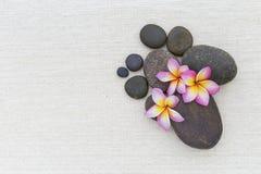 Λουλούδι Plumeria στην καφετιά πέτρα Στοκ Εικόνες