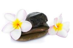 Λουλούδι Plumeria στην πέτρα με το άσπρο υπόβαθρο Στοκ Φωτογραφίες