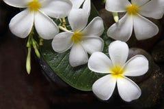 Λουλούδι Plumeria στο δάπεδο πετρών Στοκ Φωτογραφίες