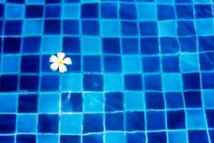 Λουλούδι Plumeria στο νερό Στοκ εικόνες με δικαίωμα ελεύθερης χρήσης