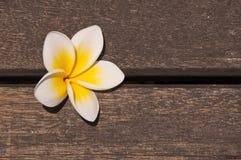 Λουλούδι Plumeria στο ξύλινο πάτωμα Στοκ Φωτογραφία