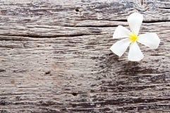 Λουλούδι Plumeria στο παλαιό ξύλο Στοκ φωτογραφίες με δικαίωμα ελεύθερης χρήσης