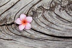 Λουλούδι Plumeria στο παλαιό ξύλο Στοκ Εικόνες