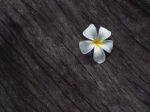 Λουλούδι Plumeria στο σκοτεινό ξύλινο πάτωμα τόνου Στοκ Εικόνες