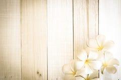 Λουλούδι plumeria Frangipani στο μαλακό ύφος χρώματος και θαμπάδων άσπρο σε ξύλινο Στοκ Φωτογραφία