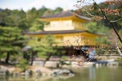 Λουλούδι Sakura με το υπόβαθρο του ναού Kinkakuji Στοκ εικόνα με δικαίωμα ελεύθερης χρήσης