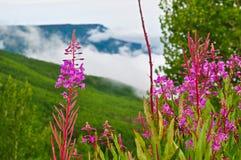 Λουλούδι scape Στοκ φωτογραφία με δικαίωμα ελεύθερης χρήσης
