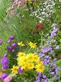 Λουλούδι Serie Στοκ Φωτογραφία