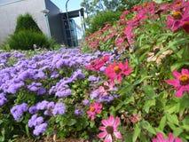 Λουλούδι Serie Στοκ φωτογραφία με δικαίωμα ελεύθερης χρήσης