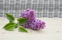 Λουλούδι Sering στο ξύλινο υπόβαθρο Στοκ Εικόνες