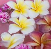 Λουλούδι SPA Στοκ Εικόνες