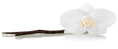 Λουλούδι vanila ορχιδεών Στοκ φωτογραφίες με δικαίωμα ελεύθερης χρήσης