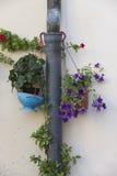 Λουλούδι vase Στοκ Εικόνες