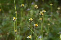 Λουλούδι view1 Στοκ φωτογραφίες με δικαίωμα ελεύθερης χρήσης