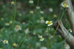 Λουλούδι view6 Στοκ φωτογραφίες με δικαίωμα ελεύθερης χρήσης