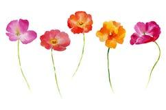 Λουλούδι Watercolor που τίθεται για το σχέδιό σας Στοκ Φωτογραφίες